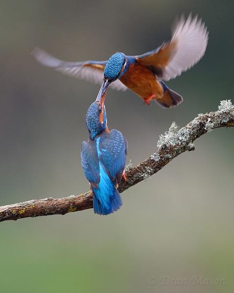 A Fine Romance ! by WindowonWildlife