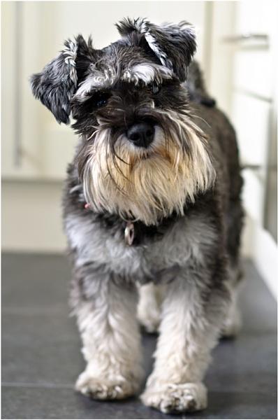 Maisie by gmorley