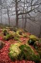 Padley Fog