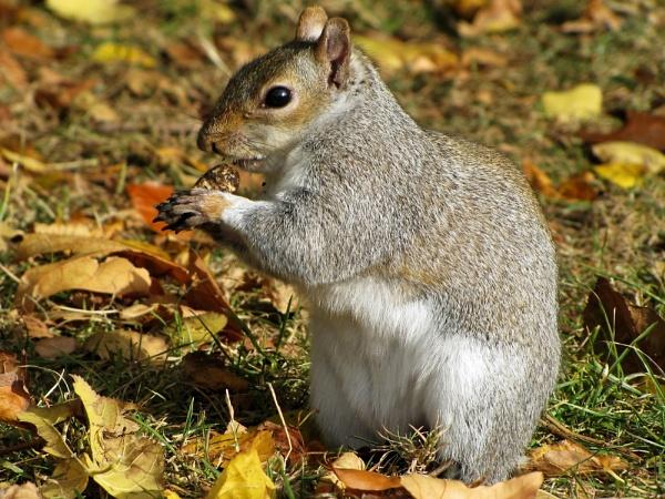 autumn wildlife by Martyna