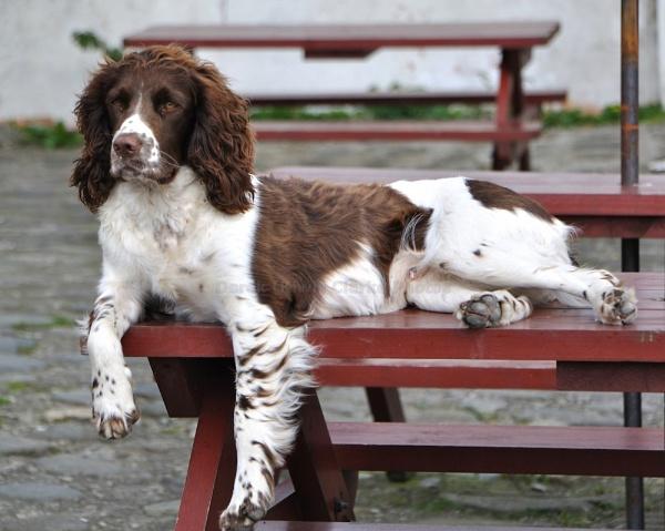 Its a dog\'s life......... by kiwi3636