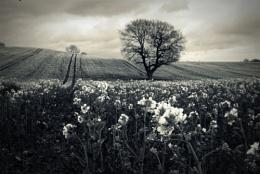 easter fields