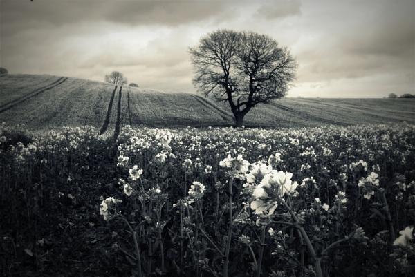 easter fields by soulsharer