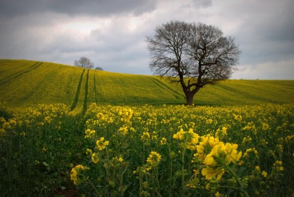 easter fields (2) by soulsharer