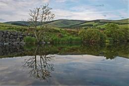 Tweed Reflections