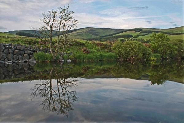 Tweed Reflections by Hali