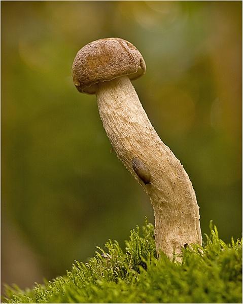 Birch Bolette & Slug by MossyOak