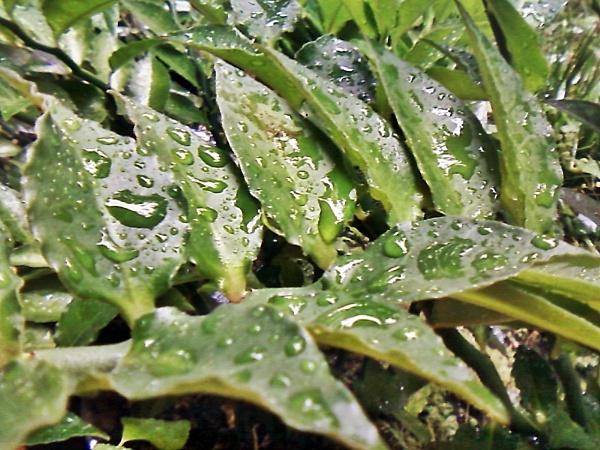 leaf by arhab