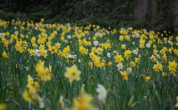 Spring is Here by photohog69