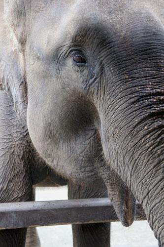 Elephant by tce5