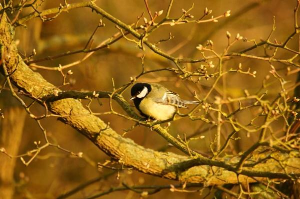 Bird in the Bush by TrevS
