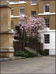 Magnolia, Middle Temple