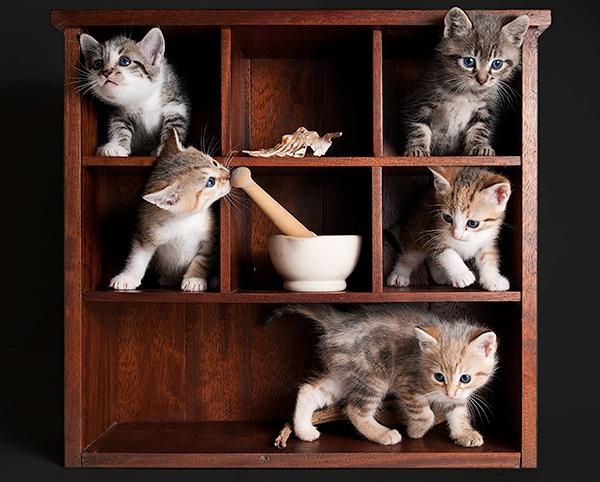 Kitten Display Cabinet by Paul_CA