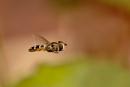 In-flight Hoverfly