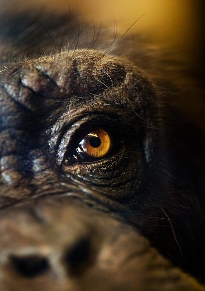 Chimp\'s Eye View by DanG