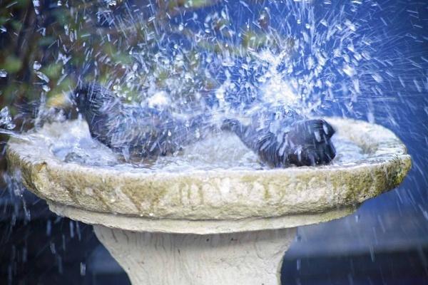 Bath Time by sanroy99