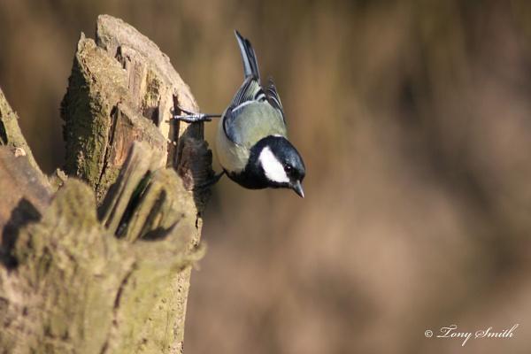 Great bird by mio2mio