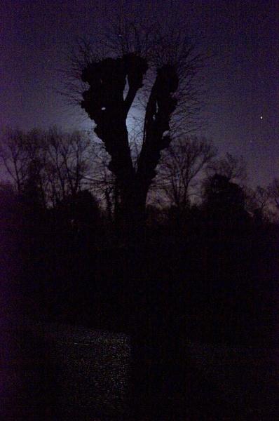 Moonshadow by dudler