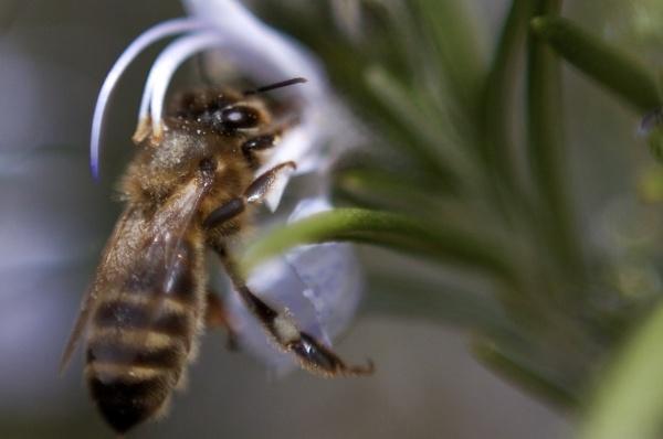Spring bee by Glen-W