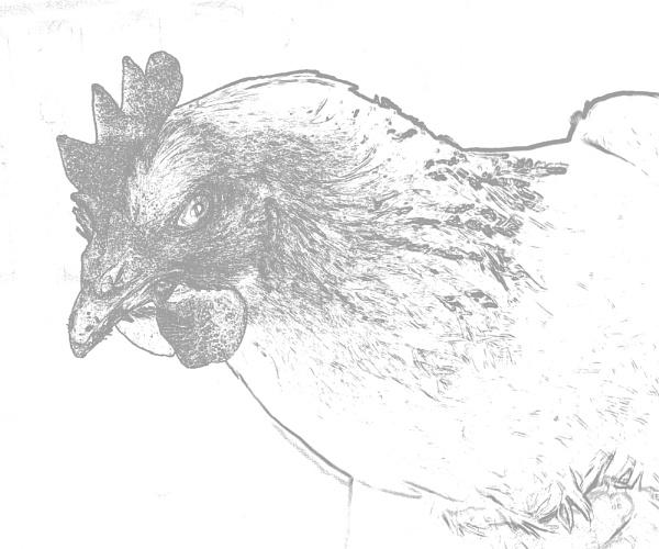 Whitecrook Hen by Owen_MCP