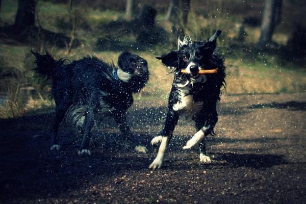 my crazy dogs... by soulsharer
