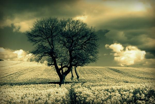 green trees ;-) by soulsharer