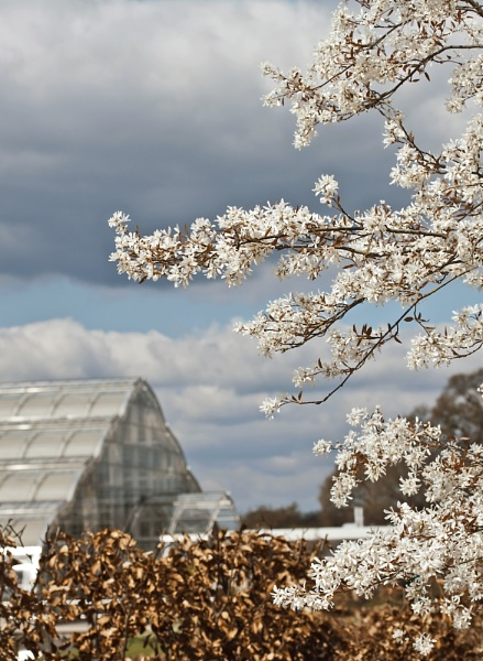 Blossom by marktc