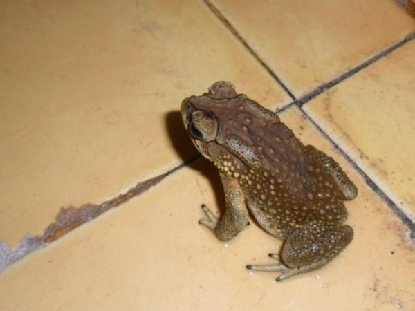 Mama Toad? by Chinga