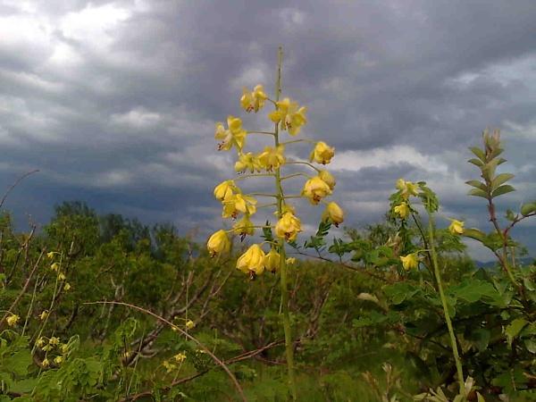 Flowers by wajid