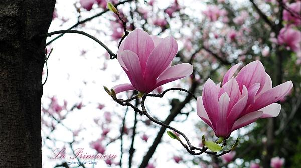 la primavera by letuong