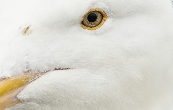 Bird Eye by rotella