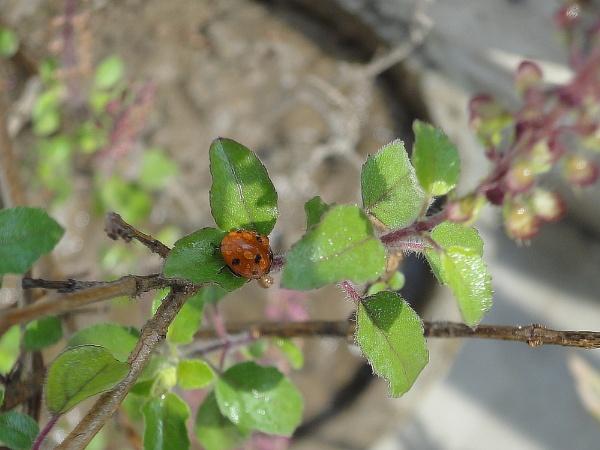 cute bug by bhavya3654
