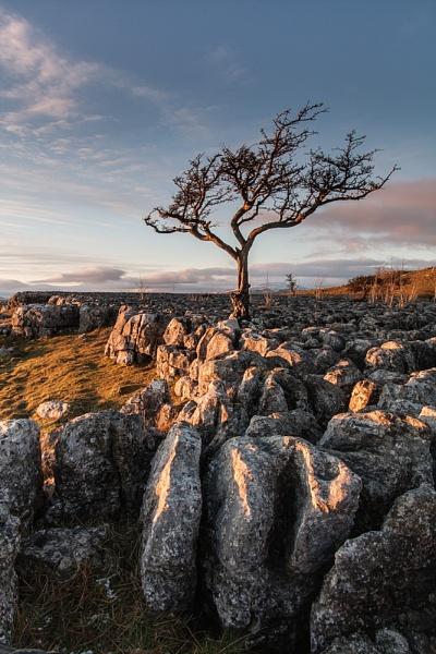 return to the tree by paulrankin