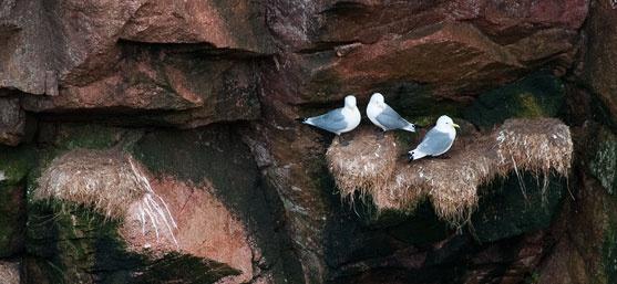 3 Birds by GeorgeBuchan