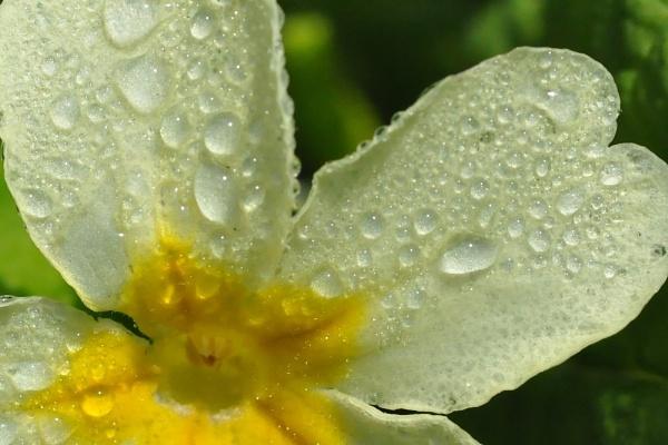 Dewdrop by EventHorizon