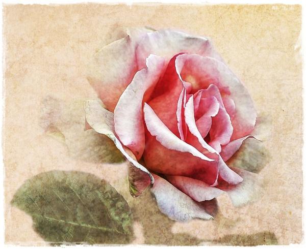 Pretty in Pink by JackieB