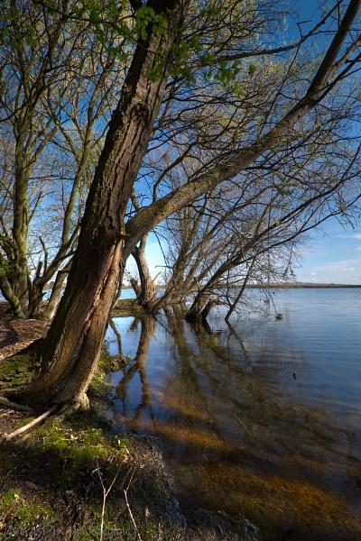 Marston Lake 1 by MiqsPix