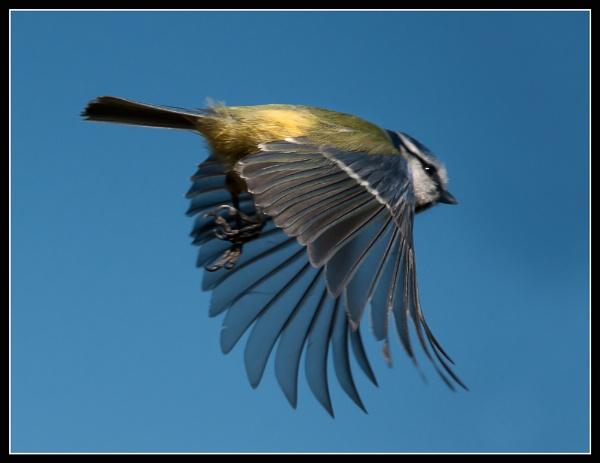 Flying High by JonnyNI