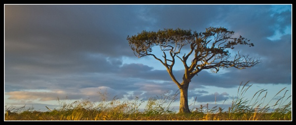 Lone Tree by JonnyNI