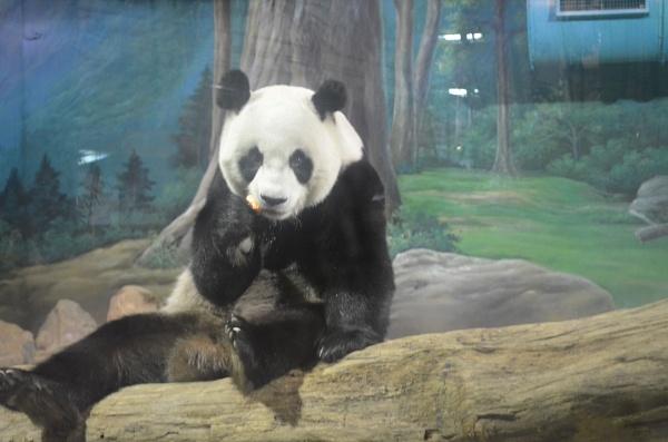 Panda by hammers3417