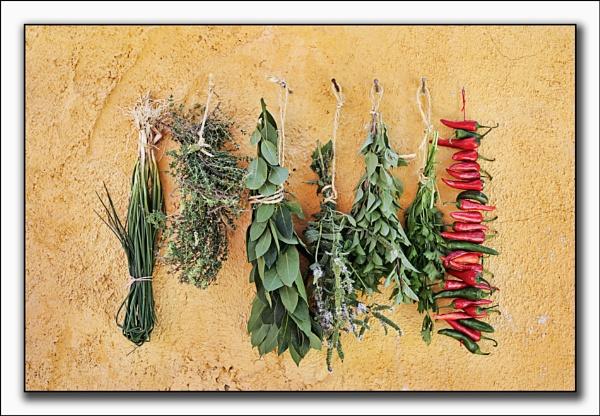 garden herbs by PatriciaWilson