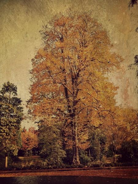 Autumn Pride by ESSEXGAL