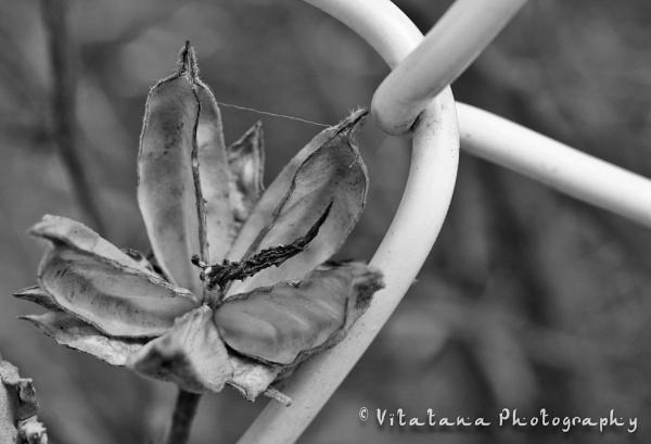 Seasons Change by Vitatana