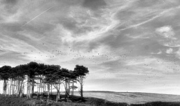 Trees & Birds at Budleigh