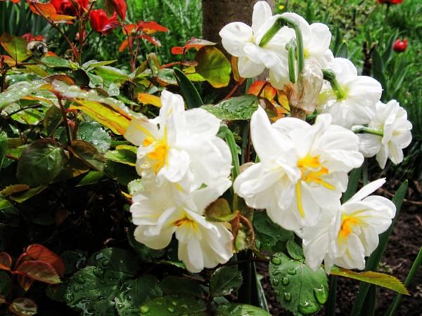 flowers+rain by binder1