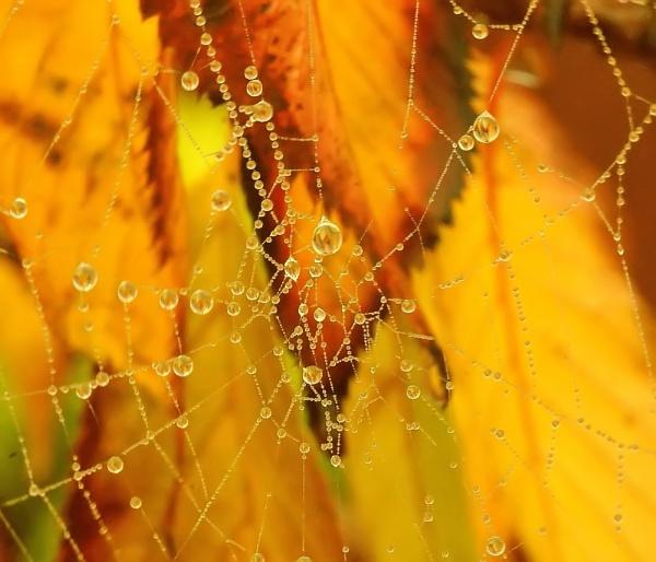 web sparkles by lollipop_lass