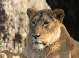 On Safari at London Zoo