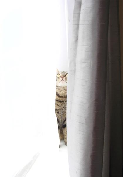 Hiding by ChunkyButFunky