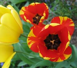 Spring Color