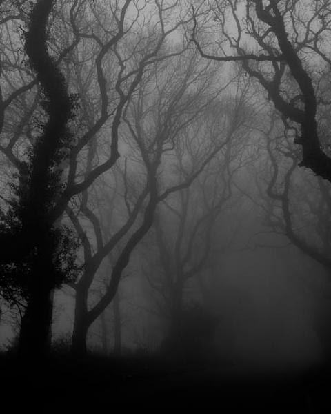 Tree Fog copyright Brendan Buesnel by BrendanBuesnel